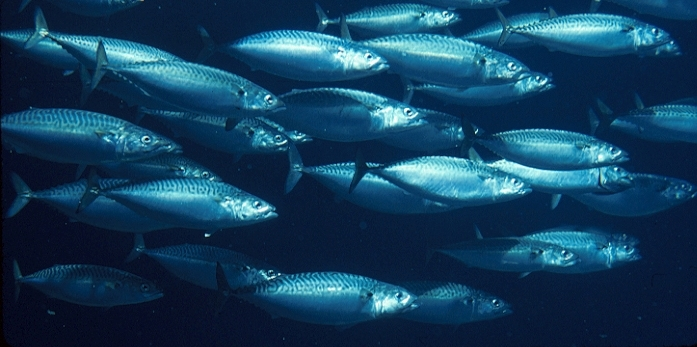 Fishing for solutions: Recovering the bounty of theocean
