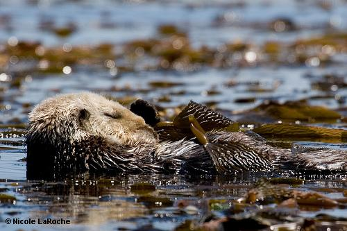 Blood, bone and brainpower: A deep dive into sea otterDNA