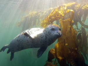 It might be easier to observe skittish animals like harbor seals. Photo ©Peter Bridson.