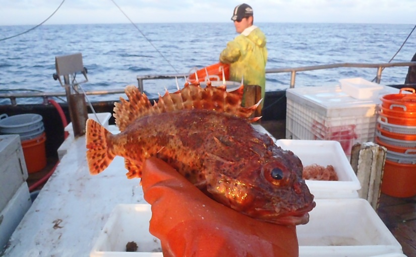 Monterey Bay Fisheries Trust: Preserving local catch for localfishermen