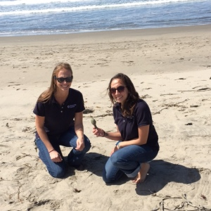 An aquarium team scoured the beach north of the Pajaro River. They found the shark tag near the high tide line.
