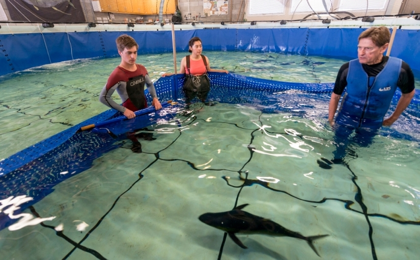 Chuck Farwell: Tuna Scientist, Mentor, FishWhisperer