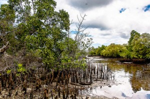 Rising sea levels put important coastal habitats like mangroves and wetlands at risk. Photo courtesy Sandy Marie.