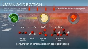 Acidification illustration