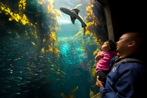 Aquarium visitors are inspired to speak up for a future with a healthy ocean. Photo by Monterey Bay Aquarium/Randy Wilder.