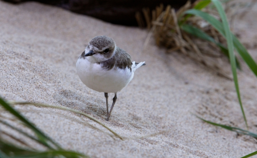 Climate change ruffles birds'feathers