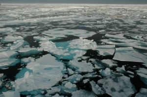Researchers have confirmed what satellite observation show: summer Arctic sea ice is thinner, and covers a smaller area. Photo by Bonnie Light, University of Washington.