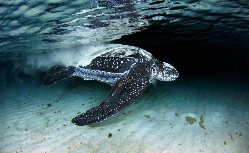 COP21: A chance for a seachange