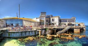 The Monterey Bay Aquarium occupies the site of a former sardine cannery.