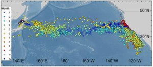 The TRCC team has mapped the migrations of hundreds of Pacific bluefin tuna.