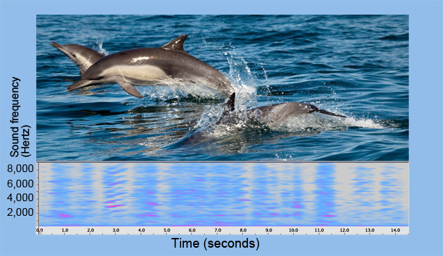 MBARI's new ear on the sounds of theocean