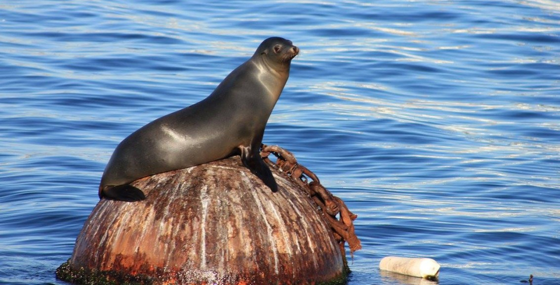 A sea lion basks in the sunshine on Monterey Bay. Photo by Michelle Bender