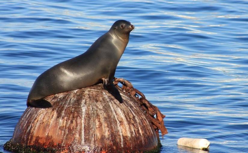 California marine life feeling the heat of climatechange