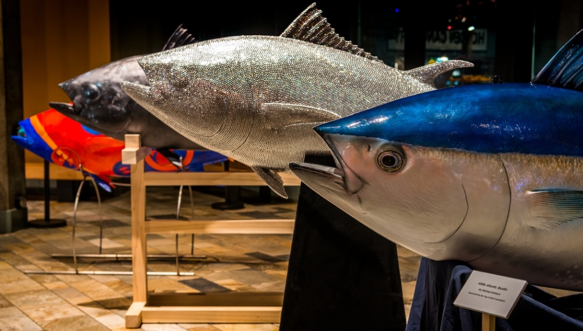 It takes a global village to conserve bluefin tuna