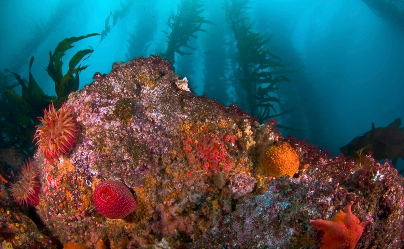 Protecting the ocean, the heart of Earth's climatesystem