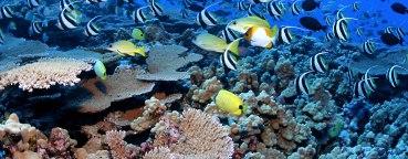 NOAA-coral reef 2