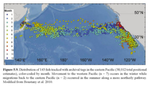 Pacific bluefin tuna migrate across the ocean, from spawning grounds off Japan to feeding grounds in the Eastern Pacific.