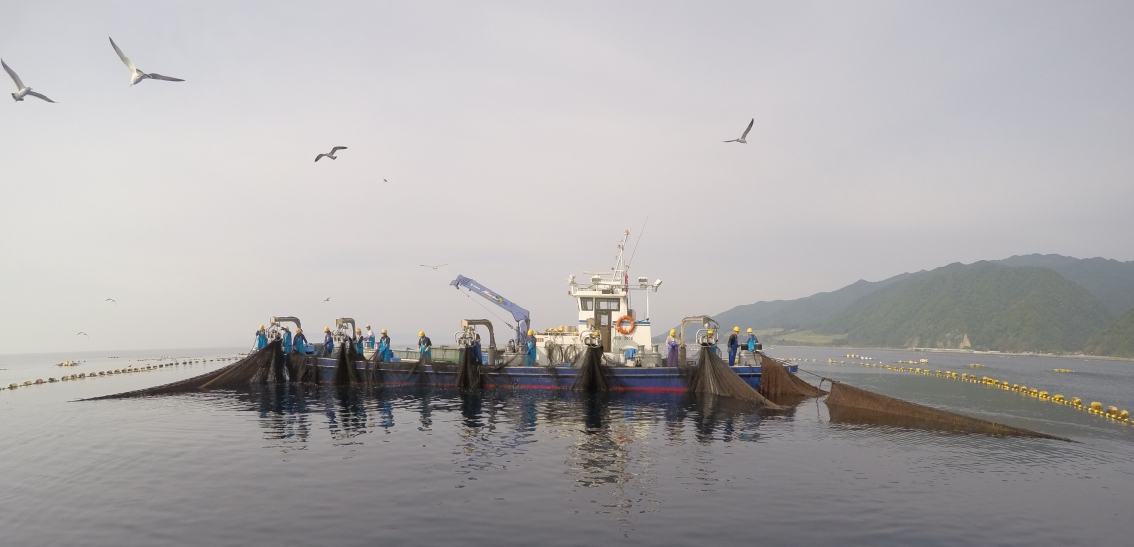 Dispatch from the Sea of Japan: Tuna tagging 101