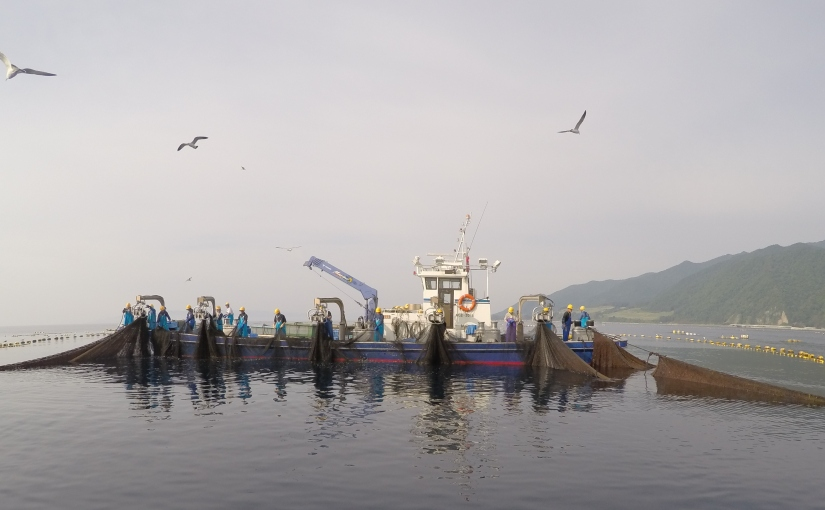 Dispatch from the Sea of Japan: Tuna tagging101