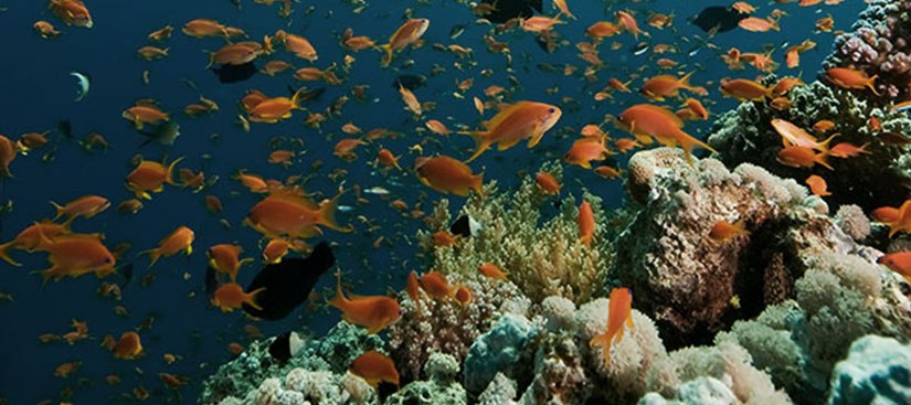 Julie Packard: A bold vision for oceanhealth