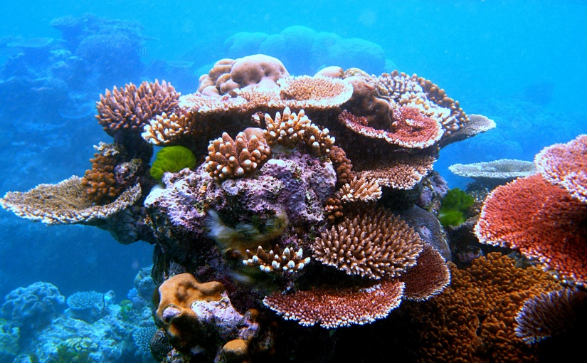 Re-writing the future for coralreefs