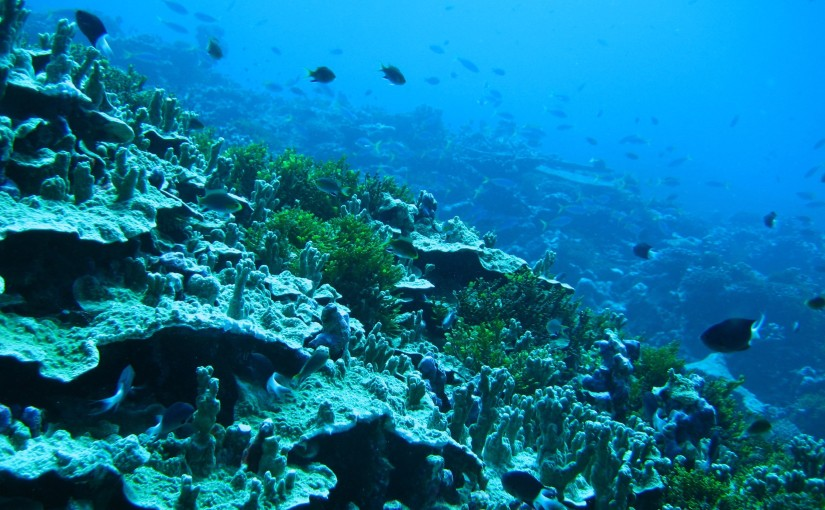 Marine protected areas: a smartapproach
