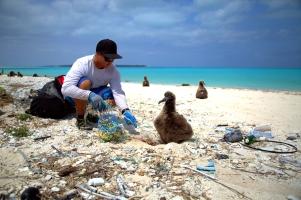 PMNM - Disentangling Laysan Albatross Chick