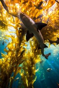 Algae, shark vertebrae, bird feathers -- even whale ear wax -- hold ocean secrets. Photo Monterey Bay Aquarium/Tyson Rininger