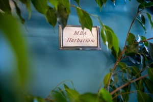 A chance encounter opened the door to the Aquarium's forgotten herbarium.
