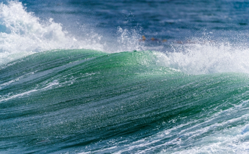 Julie Packard: It's time to invest in theocean