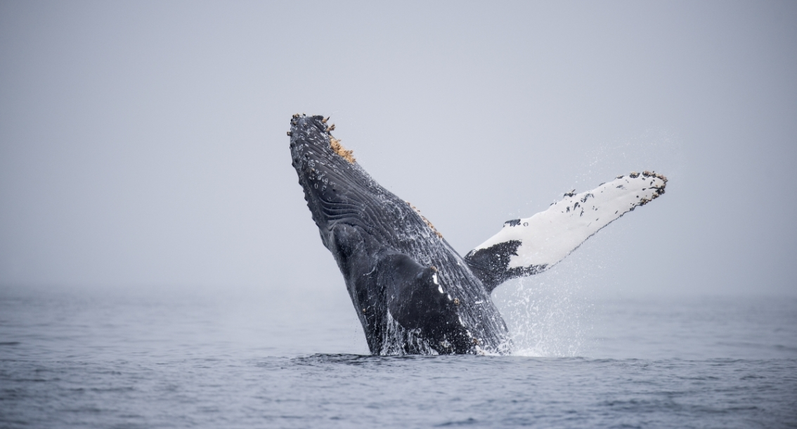 Action alert: Help protect our national marine sanctuaries