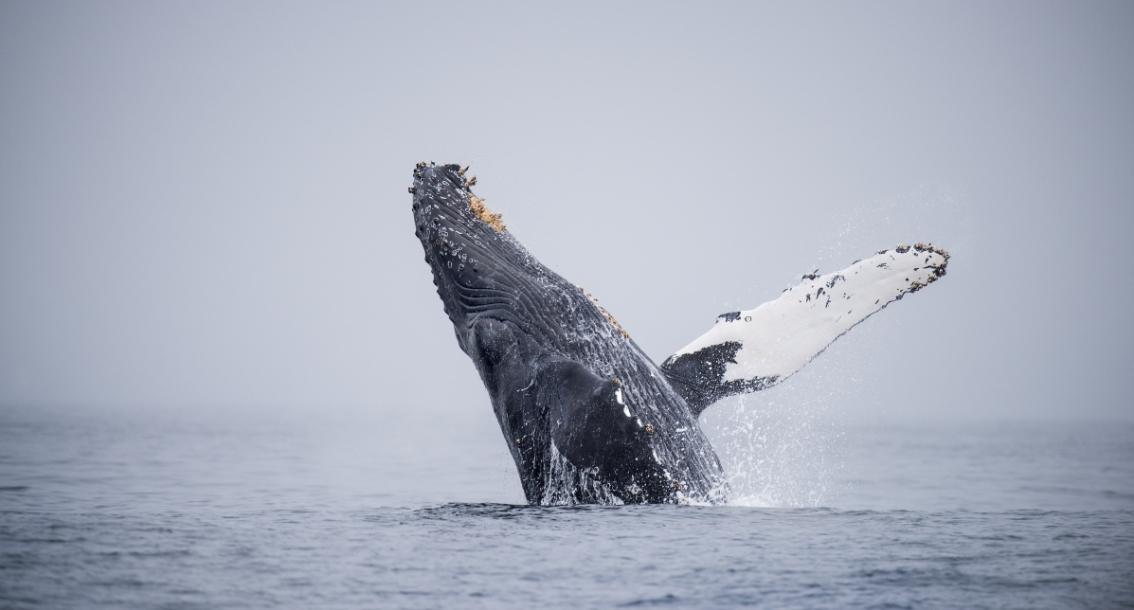 Action alert: Help protect our national marine sanctuaries