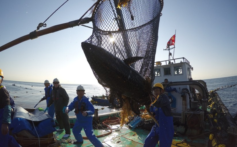 Chefs worldwide speak out to save Pacific bluefintuna