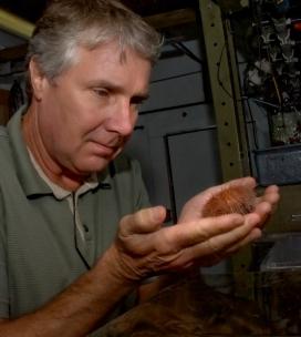 Jim Barry and deep-sea urchin