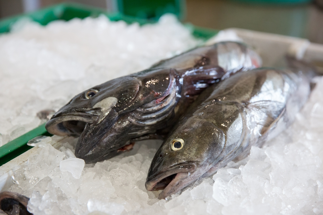 Fish carbon-era: How our fossil fuel habit is changing the future of seafood