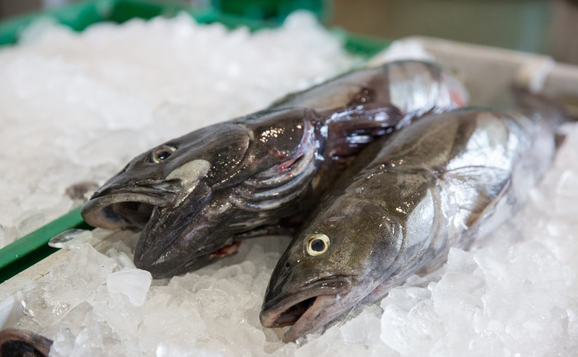 Fish carbon-era: How our fossil fuel habit is changing the future ofseafood
