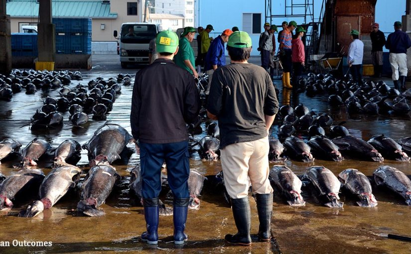 Japan sets its sights on sustainable seafood and 2020Olympics