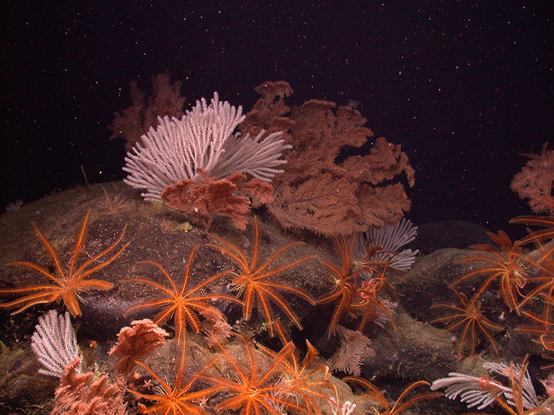 Species living around a seamount