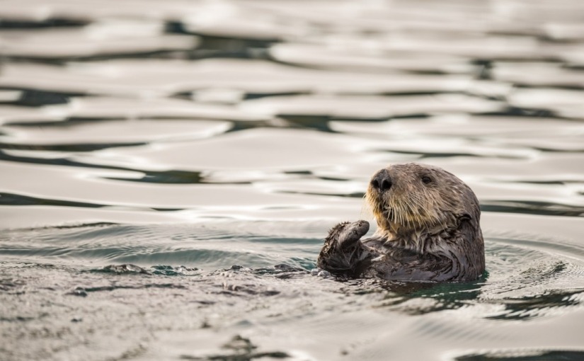 Trump Administration's Ocean Policy puts short-term economic gain over long-term oceanhealth