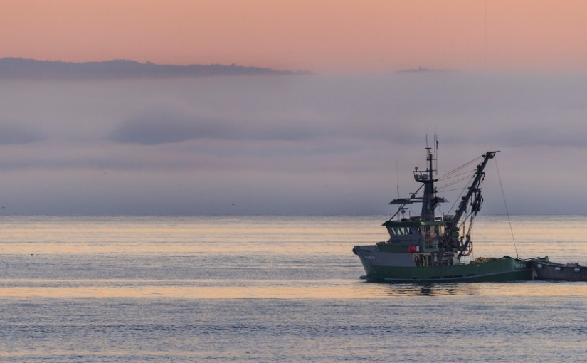 Action Alert: Keep U.S. seafood sustainable—speak out against H.R.200