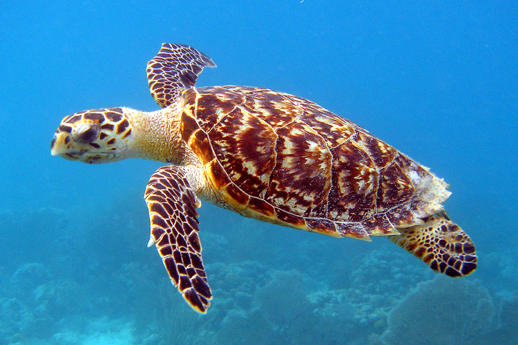 Connecting historical tortoiseshell trade to modern IUU fishingnetworks