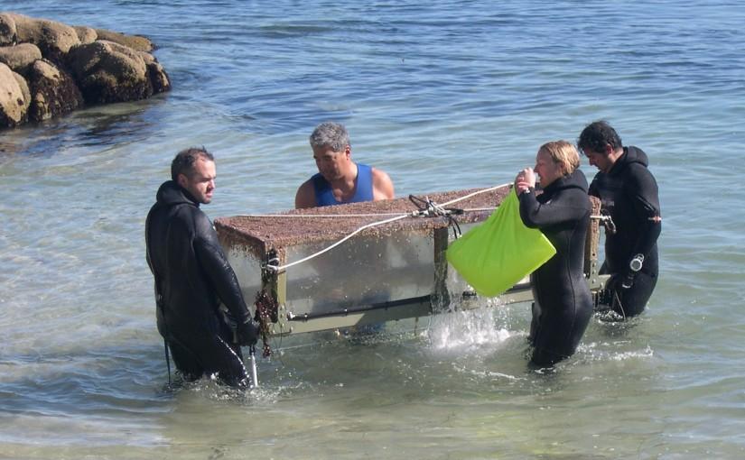 Field studies of oceanacidification