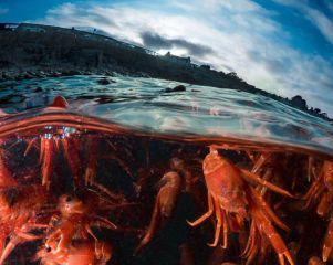 Red crabs-patrickwebster