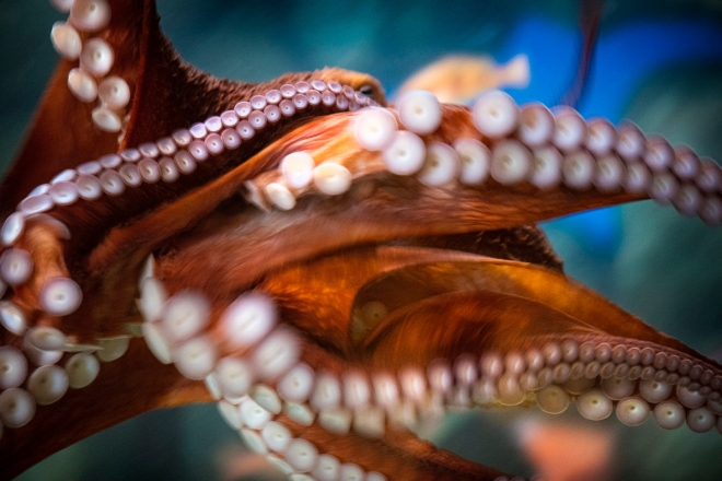 octopus-TR20-0153